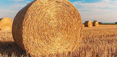 coptis-landwirtschaft